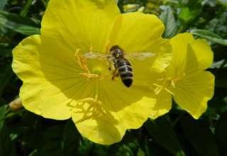 Sauna spas za pčele