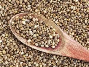 Hemp sjemenke