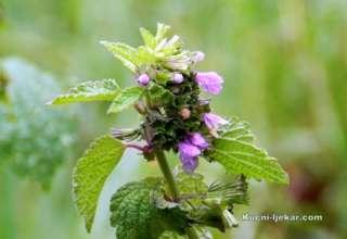 Ljekovito bilje prikupljajte lično