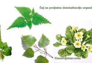 Čaj za proljetnu detoksikaciju organizma
