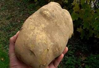 Otključavanje automobila pomoću krompira.